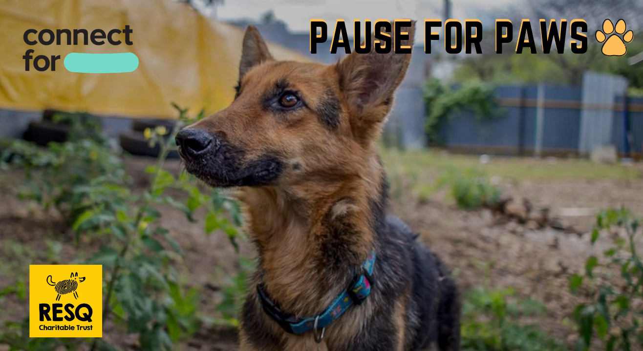 Pause For Paws